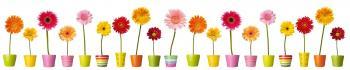 Fleurs et pots colores
